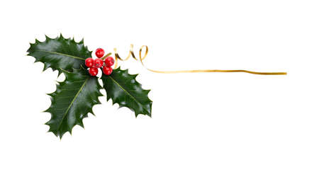A sprig, three leaves, of green holly and red berries and gold ribbon for Christmas decoration isolated against a white background.