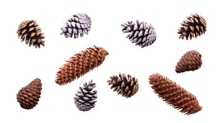 A collection of festive pine cone for Christmas tree decorations isolated against a white background.