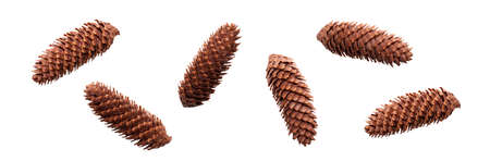 A collection of open long pine cone for Christmas tree decoration isolated against a white background.
