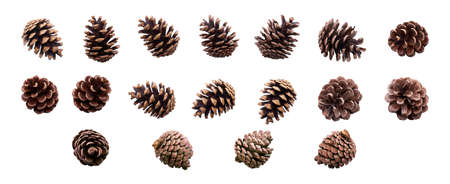 A collection of small pine cone for Christmas tree decoration isolated against a white background. Stockfoto