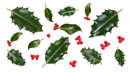 A collection of smooth and spiky green holly leaves with red berries for Christmas decoration isolated against a white background. Stockfoto