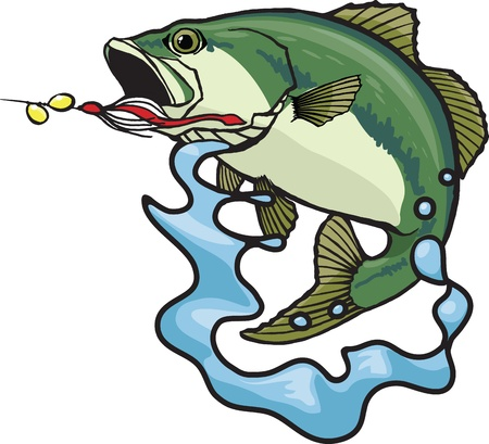 fighting fish: Illustrated Largemouth Bass  Vector and high resolution jpeg files available