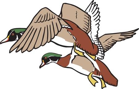 mallard: Ilustración del vector Patos en vuelo y archivos de alta resolución están disponibles Vectores