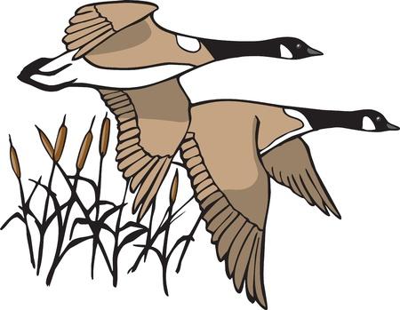Illustratie van vliegende ganzen bestand en hoge resolutie jpeg bestanden beschikbaar Vector Illustratie