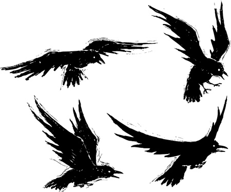 Grunge Black Crows   and high resolution jpeg files available  Vector