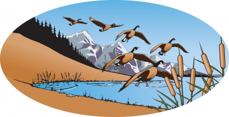 Canada Geese 2 Illustration