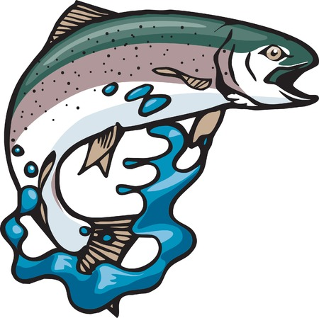 An illustrated Rainbow Trout jumping out of water  and high resolution jpeg files available