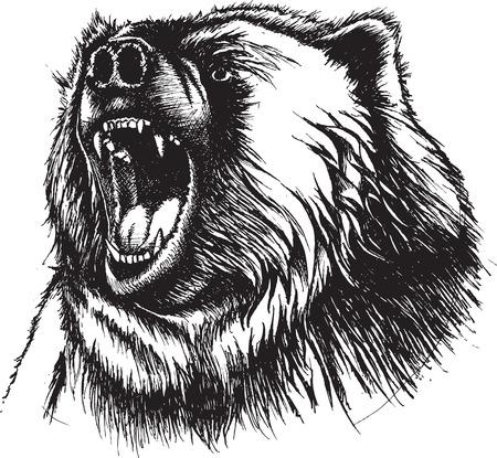 うなっているクマのイラスト。元のペンとインク。ベクトルと利用可能な高解像度 jpeg ファイルです。