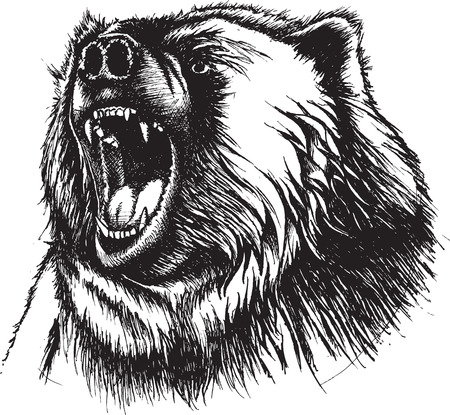 Illustration of growling Bear. Original pen and ink. Vector and high resolution jpeg files available. Vettoriali