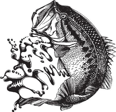 Een geïllustreerde bass springen. Vector en hoge resolutie jpeg-bestanden beschikbaar. Originele pen en inkt gevectoriseerd. Stock Illustratie