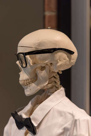 Dr Bones with glasses