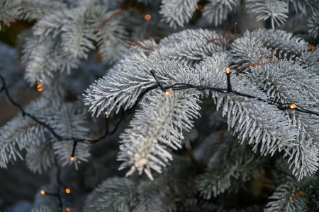 Decorated fir-tree outside on a market in december