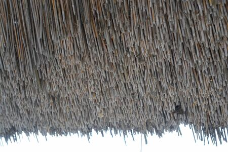 Single stalks of a thatched roof taken in Holland