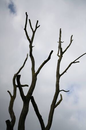 A tree without leaves like in an old western movie