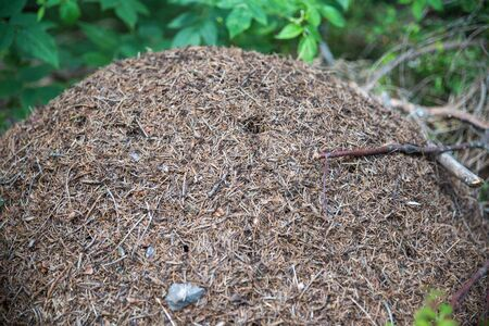 Thousands of ants on a very big hill