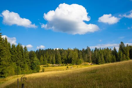 Beautiful sunny day in the German Black Forest near Bernau