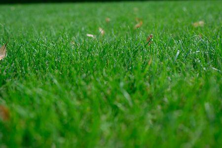 lush green lawn taken on a summer field Фото со стока