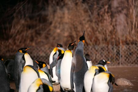 First warming sun rays in winter the penguins enjoy it