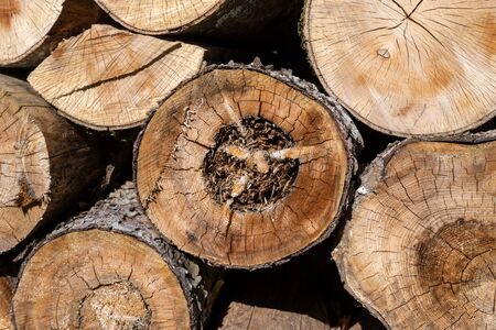 Firewood on a pile in a detailed view.
