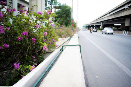 Bush with purple flower on road side , urban design ,development,green space 스톡 콘텐츠