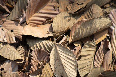 Close-up of a pile of dry leaves in a natural forest. Banque d'images