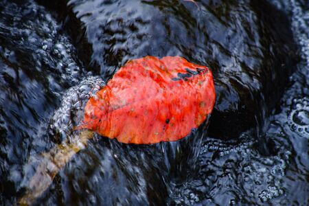 A photograph of a red leaf on a rock and flowing water