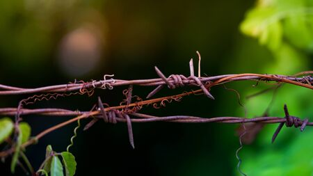 Close-up of an old iron barbed fence and a soft focus green bokeh background
