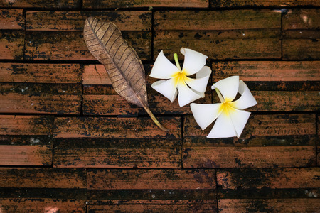 plumerias: Wilting plumerias and leave fall on dirty tearracotta bricks