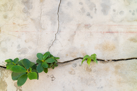 grown up: Small plants germinated and grown up from the cracked concrete wall background
