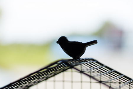 goal cage: Silhouette bird escaping from the cage. Freedom concept. Stock Photo
