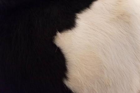 cow skin: Cow skin