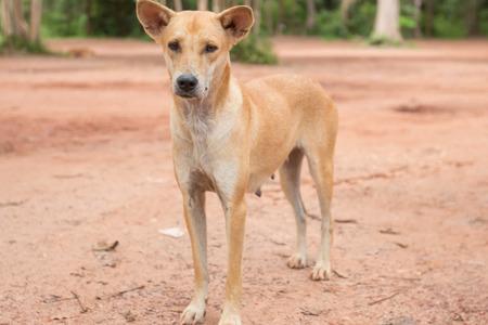 stray: Stray dog in the park Stock Photo