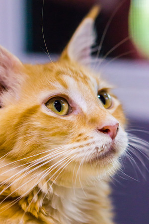 Cat looking in close up