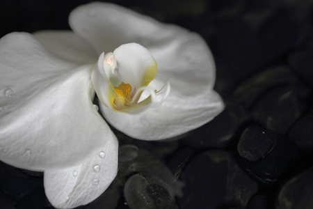 closedup: Closed-up of white orchids on the black stones Stock Photo