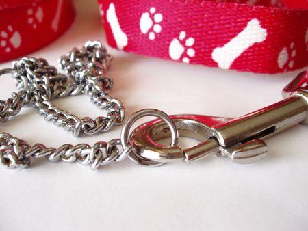 dog on leash: estrangulador collar de perro y correa