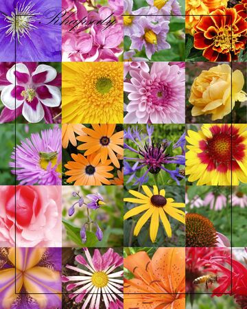 grouping: grouping of several florals