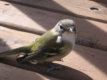 Bird Фото со стока