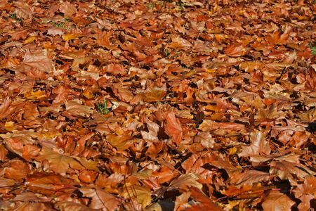 vallen bladeren die de grond