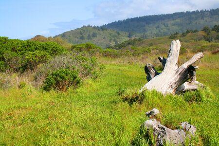 古い木草原