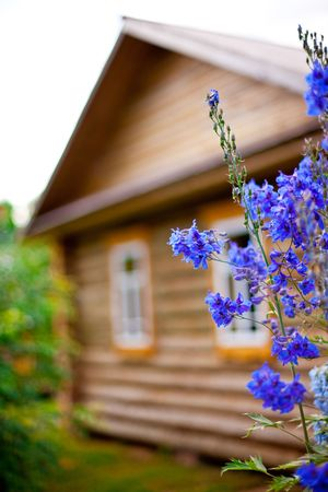 wooden country house with front garden. flowers in a focus. small GRIP Stock Photo