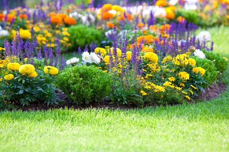 garden marigold: multicolored flowerbed on a lawn. horizontal shot. small GRIP Stock Photo
