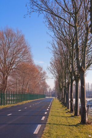 Country Road surrounded by trees and fence. vertical shot Stock Photo - 8351807