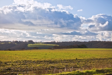rural meadow landscape in Normandy, France. horizontal shot Stock Photo - 8351805