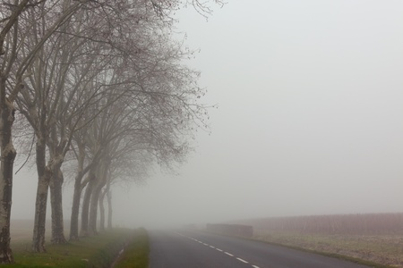 A country road on a foggy day at France.  photo