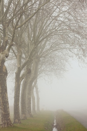 A country road on a foggy day at France photo