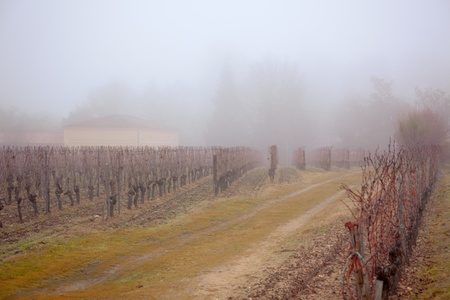bare wire: Winter in France: Vineyard rows in the mist.�Toned and vignetted image