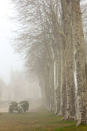 Country French chalet on a foggy day. Toned image photo