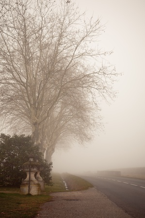 A country road on a foggy day at France. Toned and vignetted image Stock Photo - 10772109