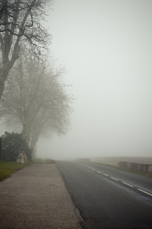 A country road on a foggy day at France.�Toned and vignetted image photo