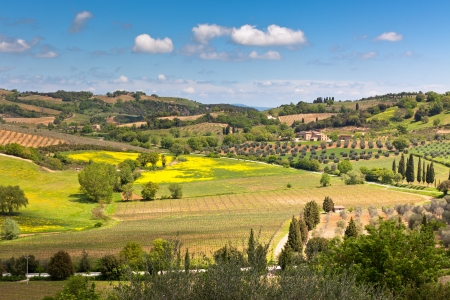 Outdoor Tuscan hills landscape. Horizontal bright shot